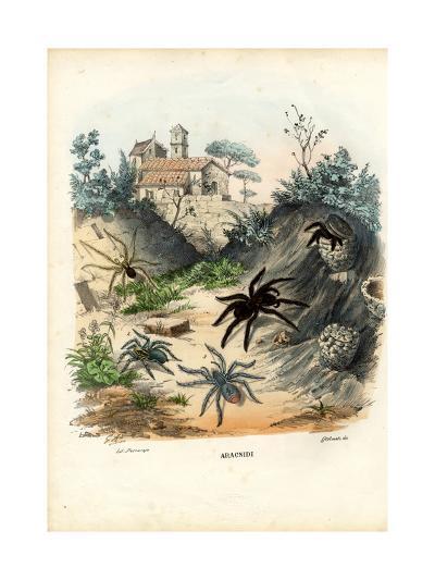 Spiders, 1863-79-Raimundo Petraroja-Giclee Print