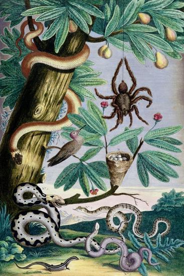 Spiders and Snakes: from Albert Seba's 'Locupletissimi Rerum Naturalium', C.1750--Giclee Print