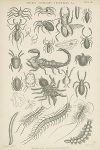 Spiders, Scorpions, Centipedes Etc