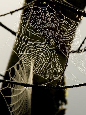 Spiderweb on a Branch-Bill Hatcher-Photographic Print