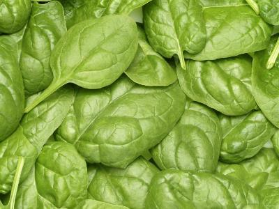 Spinach--Photographic Print