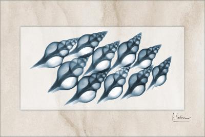 Spindle Shell-Albert Koetsier-Art Print