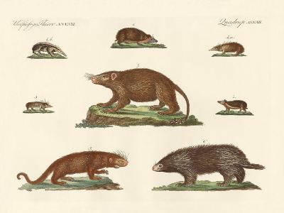 Spiny Animals--Giclee Print
