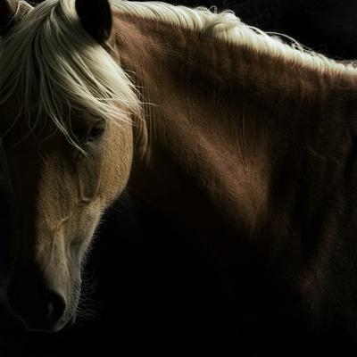 https://imgc.artprintimages.com/img/print/spirit-horse_u-l-q1b9dy30.jpg?p=0