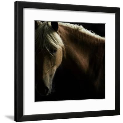 Spirit Horse-Tony Stromberg-Framed Photographic Print