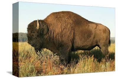 Spirit of the Plains--Stretched Canvas Print