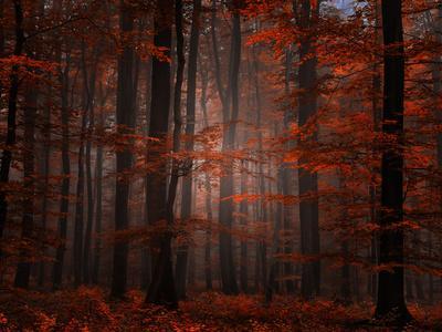 Spiritual Wood-Philippe Sainte-Laudy-Premium Photographic Print