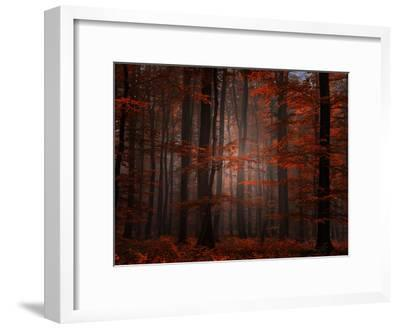 Spiritual Wood-Philippe Sainte-Laudy-Framed Photographic Print