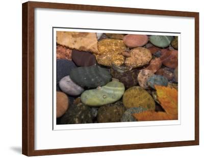 Splash in a Stream-Donald Paulson-Framed Giclee Print