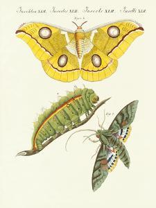 Splendid Foreign Butterflies