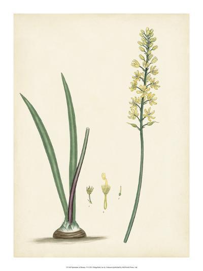 Splendors of Botany VI--Giclee Print