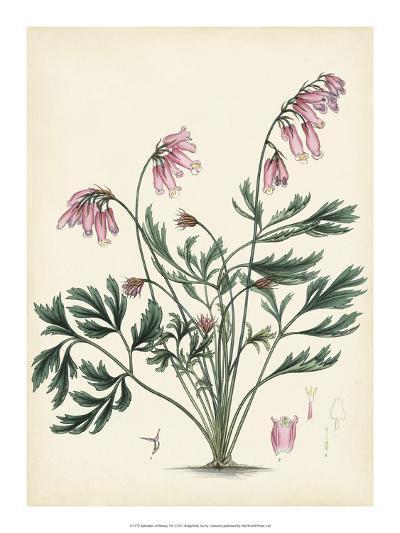 Splendors of Botany VII--Giclee Print
