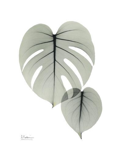 Split Leaf Philodendron Portrait-Albert Koetsier-Art Print