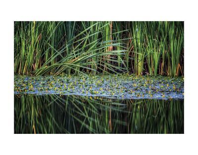 Splitting Reeds-Bob Larson-Art Print