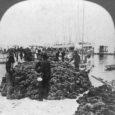 Sponge Market, Key West Harbour, Florida, USA, C1900--Photographic Print