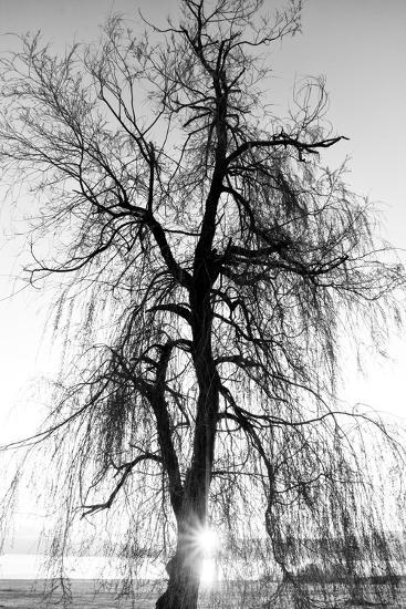 Spooky Abstract Black and White Tree Silhouette in Sunrise Time- SSokolov-Photographic Print