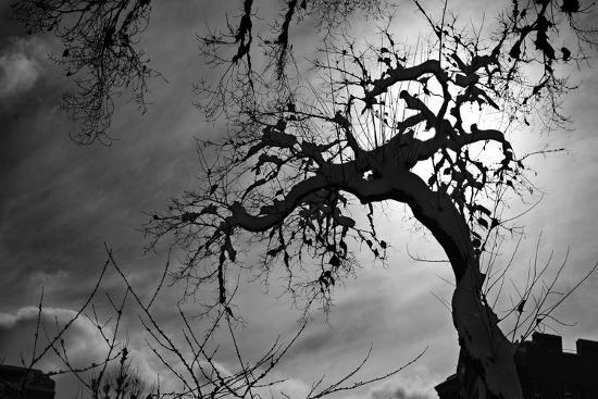 Spooky Tree--Photo
