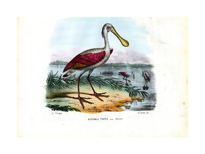 Spoonbill, 1863-79-Raimundo Petraroja-Giclee Print
