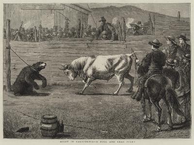Sport in California, a Bull and Bear Fight-Samuel Edmund Waller-Giclee Print