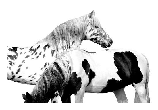 Spotted and Pinto-Samantha Carter-Giclee Print