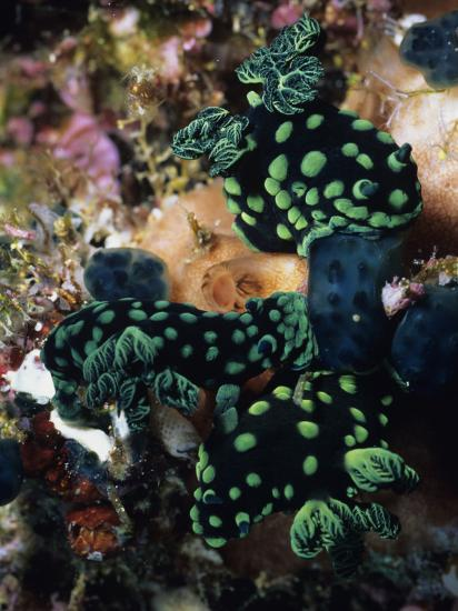 Spotted Branches Growing Atop Multi-Colored Coral Heads in Ocean Bunaken Island--Photographic Print