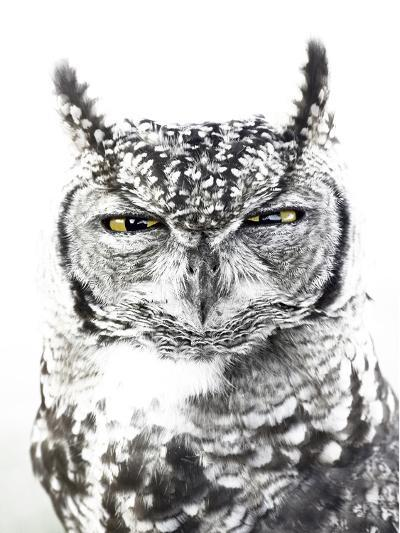 Spotted Eagle Owl, Kgalagadi Transfrontier Park, South Africa-James Hager-Photographic Print