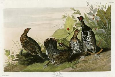 Spotted Grouse--Giclee Print