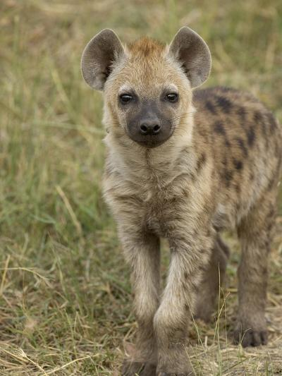 Spotted Hyena (Crocuta Crocuta) Portrait, Masai Mara Reserve, Kenya-Suzi Eszterhas/Minden Pictures-Photographic Print