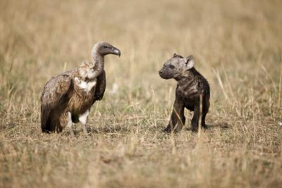 Spotted Hyena Pup and Whitebacked Vulture-Paul Souders-Photographic Print