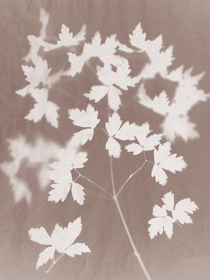 Spray in Grey-Sarah Cheyne-Giclee Print
