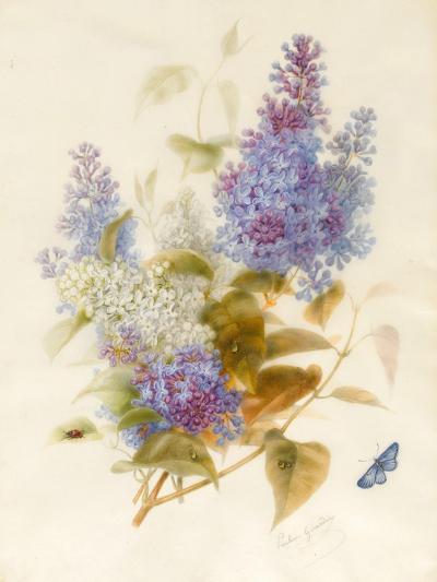 Spray of Lilac-Pauline Gerardin-Giclee Print