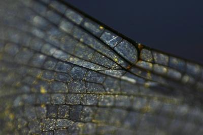 https://imgc.artprintimages.com/img/print/spread-your-wings_u-l-q1e62vy0.jpg?p=0