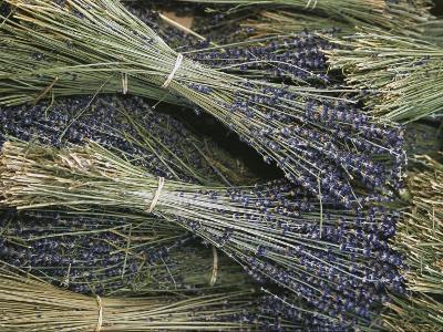 Sprigs of Lavender, Provence Region, France-Nicole Duplaix-Photographic Print