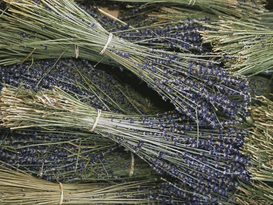 Sprigs of Lavender, Provence Region, France-Nicole Duplaix-Photographic Print
