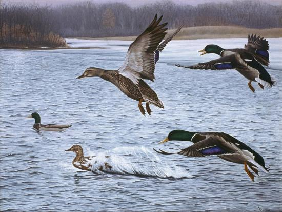 Spring Arrivals-Rusty Frentner-Giclee Print