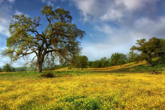 Spring at Shell Creek-Vincent James-Photographic Print