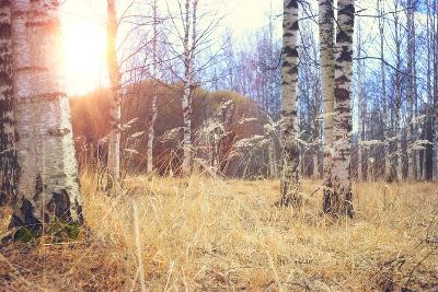 Spring Birch Forest- kichigin19-Photographic Print