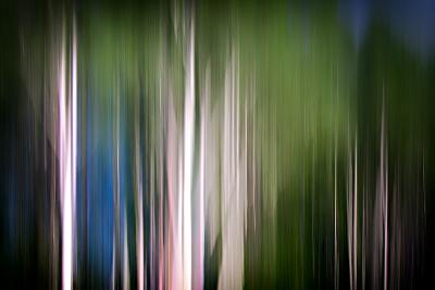 Spring Birches-Ursula Abresch-Photographic Print