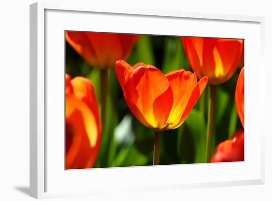 Spring Bling-pudding-Framed Photographic Print