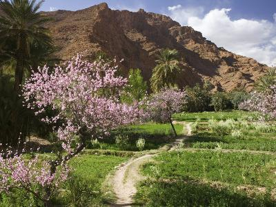 Spring Blooms, Todra Gorge Area, Morocco-Walter Bibikow-Photographic Print