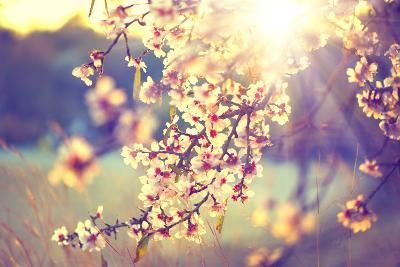 Spring Blossom Background. Beautiful Nature Scene with Blooming Tree and Sun Flare. Sunny Day. Spri-Subbotina Anna-Photographic Print