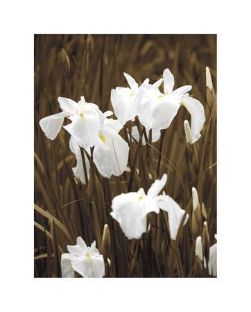 Spring Blossoms I-Boyce Watt-Giclee Print