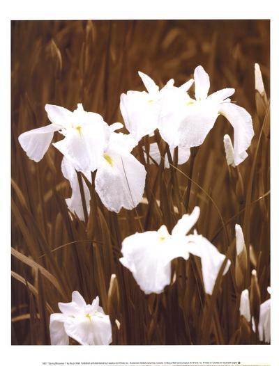 Spring Blossoms I-Boyce Watt-Art Print