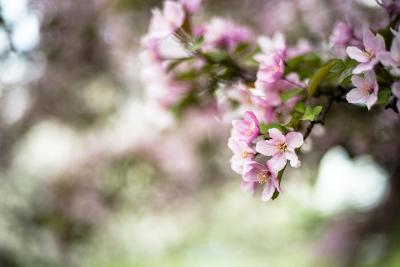 Spring Blossoms IV-Beth Wold-Photographic Print