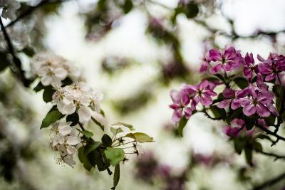 Spring Blossoms VI-Beth Wold-Photographic Print