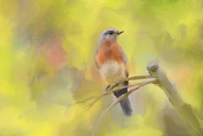 Spring Bluebird-Jai Johnson-Giclee Print