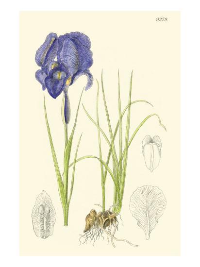 Spring Bounty I-Samuel Curtis-Art Print