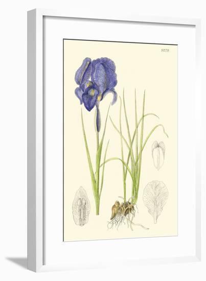 Spring Bounty I-Samuel Curtis-Framed Art Print
