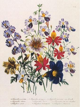 https://imgc.artprintimages.com/img/print/spring-bouquet_u-l-q1bvown0.jpg?p=0