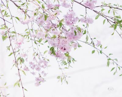 Spring Branches II-Brookview Studio-Photo